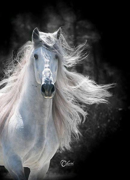 "shorenaratiani: "" Beautiful! Source: Equine Photography """