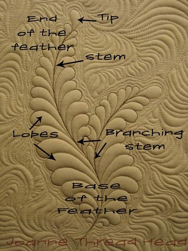 Anatomy of a feather
