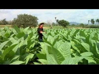 Cuba's cigar festival closes in Havana