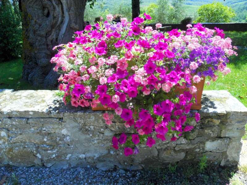 Risultati immagini per immagini belle di fiori