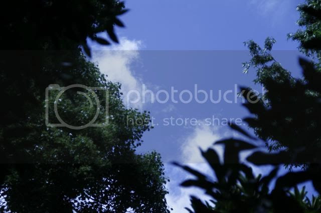 photo _MG_4159_zps5418b3a1.jpg