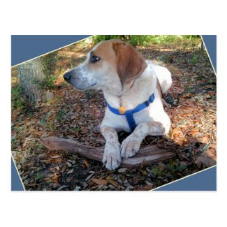 Natural Hound Dog Postcard