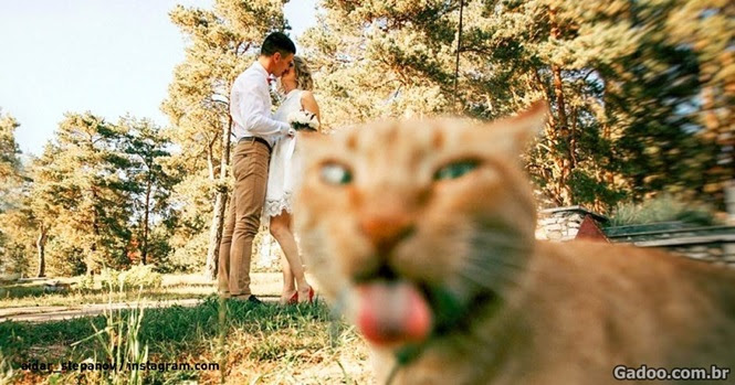 Estes animais fofos certamente valeram cada clique das lentes que o fotografaram