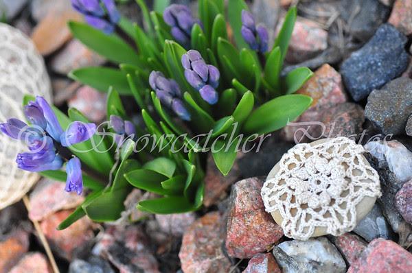 Garden 13 Snowflake