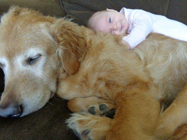 bebes y perros3
