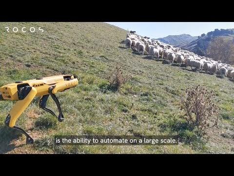 Τσοπανόσκυλο-ρομπότ προσέχει κοπάδι με πρόβατα