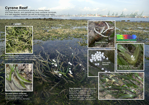 Cyrene Reefs: Magnificent seagrass meadows