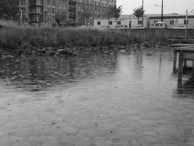 rainstorm, tanner springs