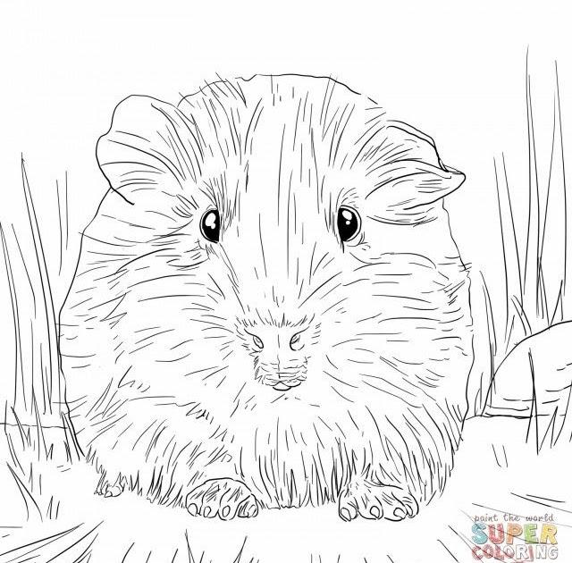meerschweinchen ausmalbilder  guinea pig coloring pages