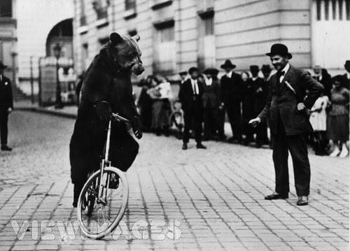 bear-riding-bike