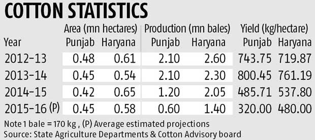 Haryana, Punjab may cut Bt cotton sowing