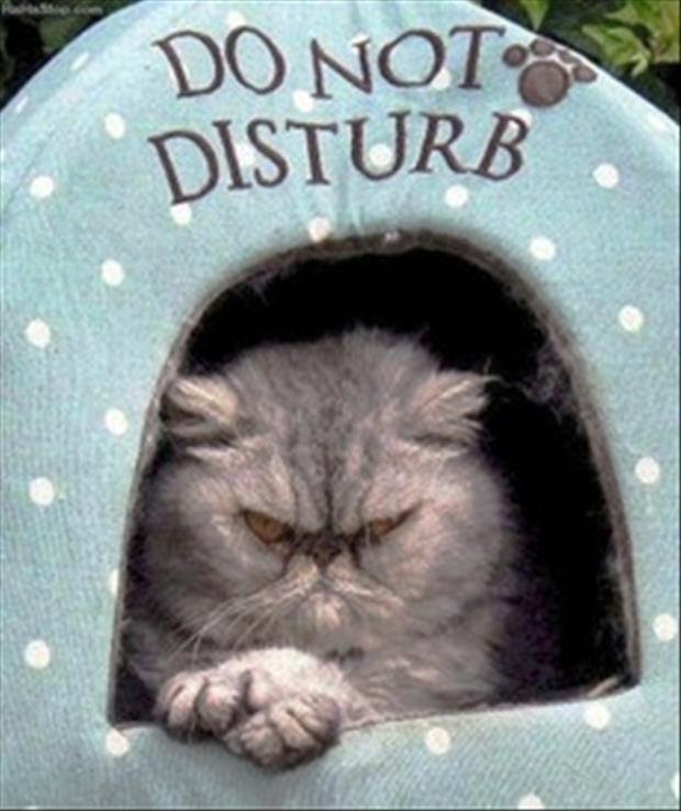 Do Not Disturb Picture Quotes
