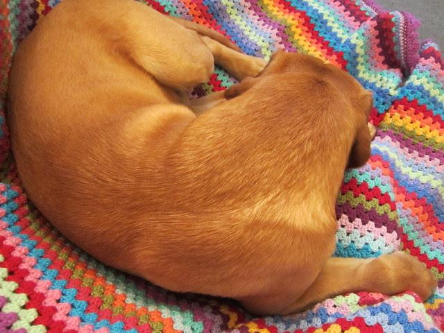 Oscar wants a blanket