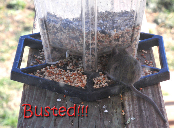 You are so busted, Dude!