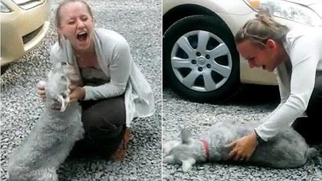 Σκύλος schnauzer, λιποθύμησε από την χαρά του όταν μέλος της οικογένειας επέστρεψε μετά από χρόνια