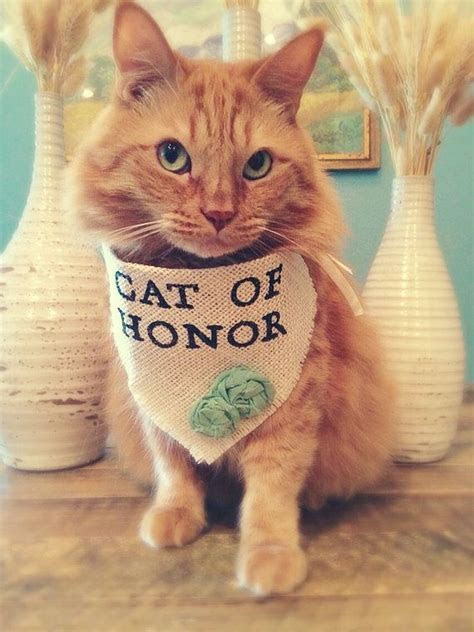 25  best ideas about Cat wedding on Pinterest   Vintage