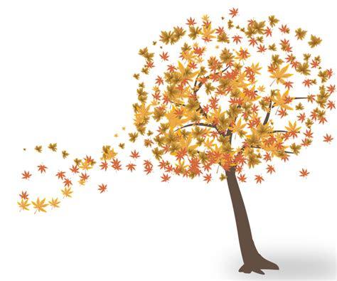 tree leaves autumn  image  pixabay