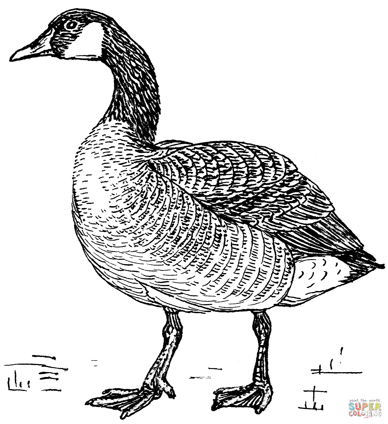 Canada Goose coloring page | Free Printable Coloring Pages