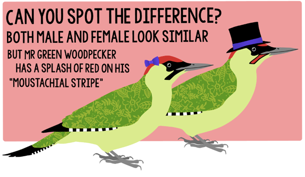 photo green_woodpecker_2_zpsc53eb09a.png