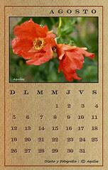 August Wood Calendar