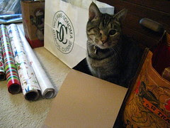 Maggie is the box inspector