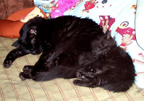 Thirteen uses Eeyore as a pillow