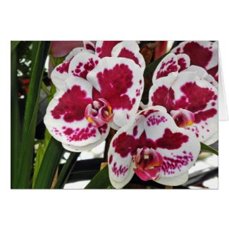 Cluster Gorgeous Velvety White and Purple Orchids Greeting Card