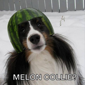 Image may contain: text that says 'MELON COLLIE?'