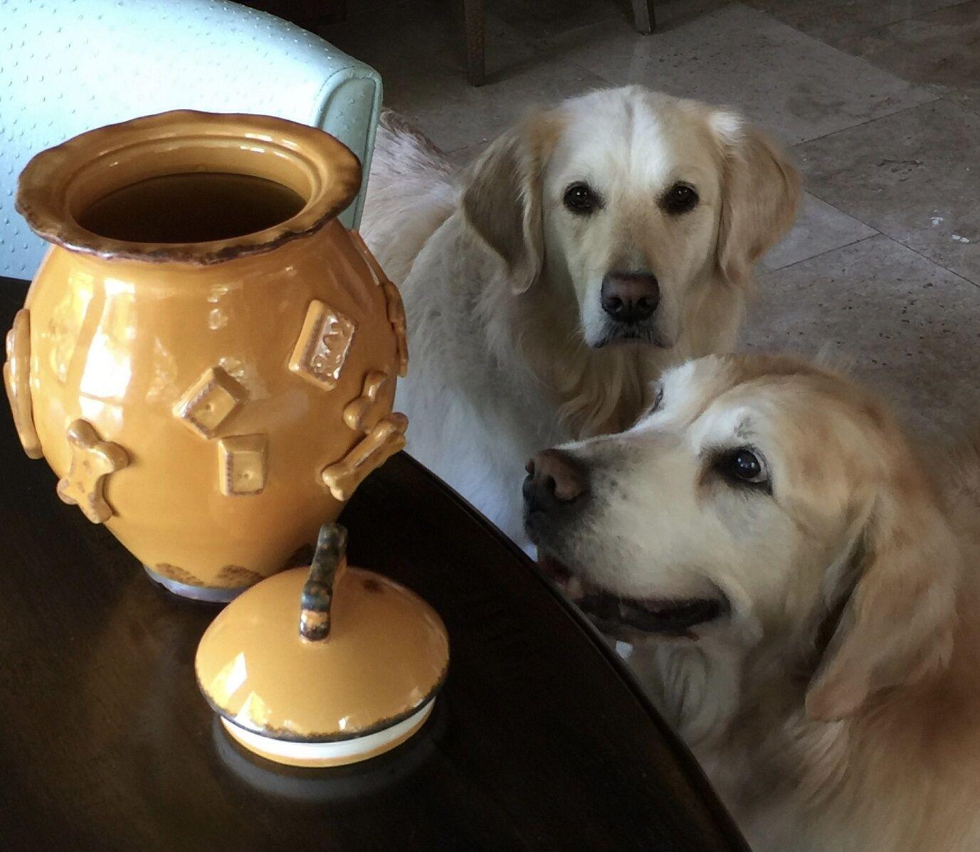 dog treat bowl snack bowl by carmel ceramica