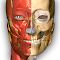 Anatomy Learning file APK for Gaming PC/PS3/PS4 Smart TV