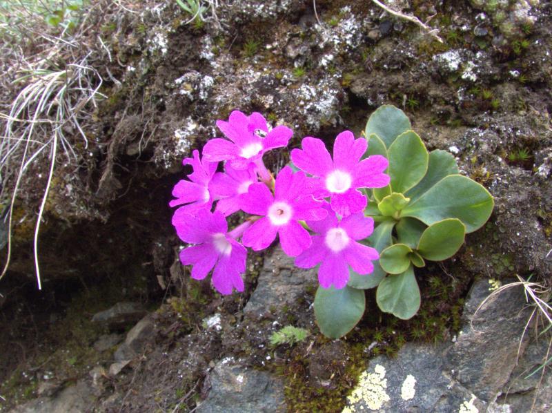 flower 4_rsz.jpg