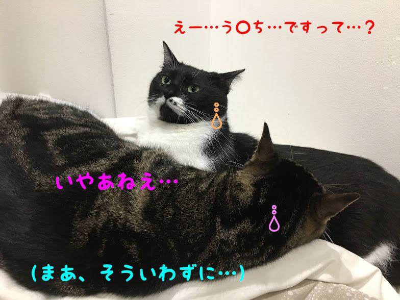 シャネルの5番、高級コーヒーは猫のウ〇チから出来ている?