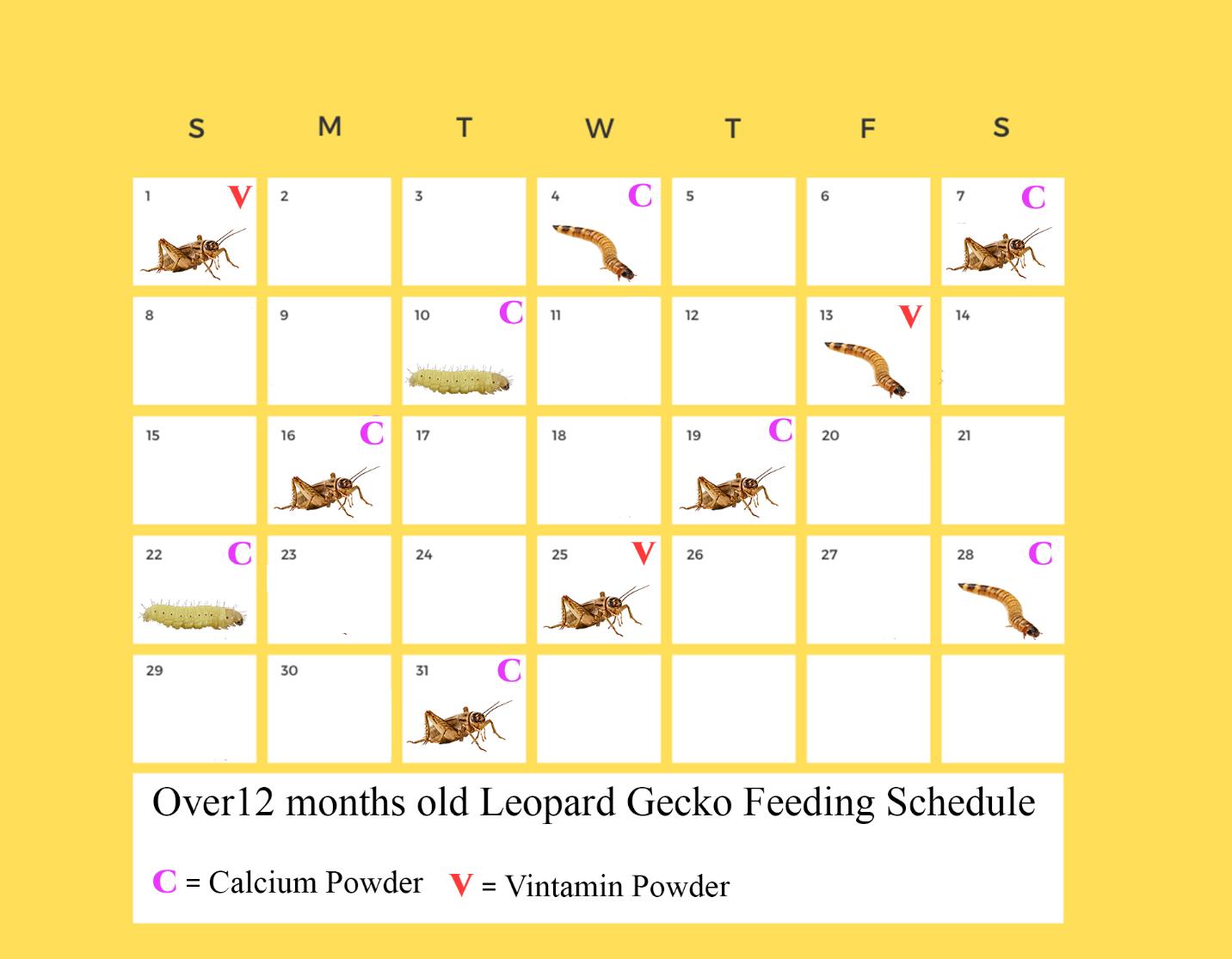 leopard gecko feeding chart