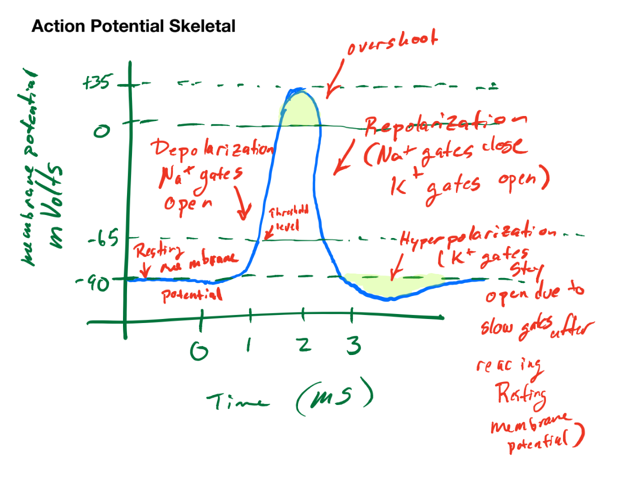 Tutors notes general cardiovascular respiratory and renal describe the effects of hypokalemia and hyperkalemia on the resting membrane potential and potassium conductance of cells including nerve and muscle ccuart Choice Image