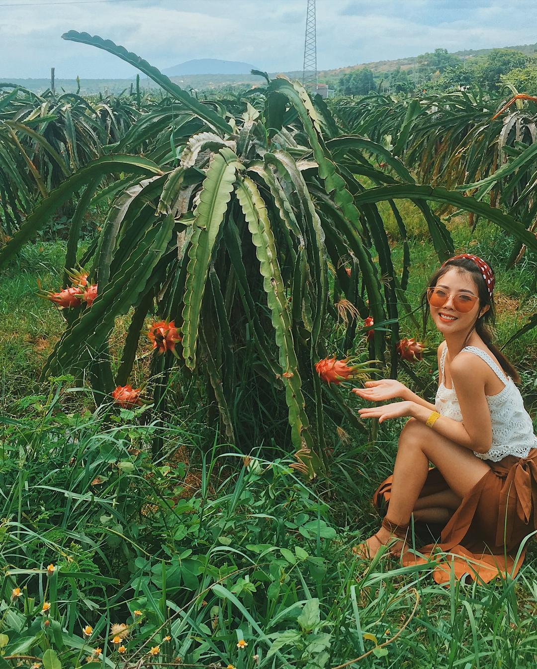 Đến Bình Thuận check in khu vườn thanh long đang khiến giới trẻ ...