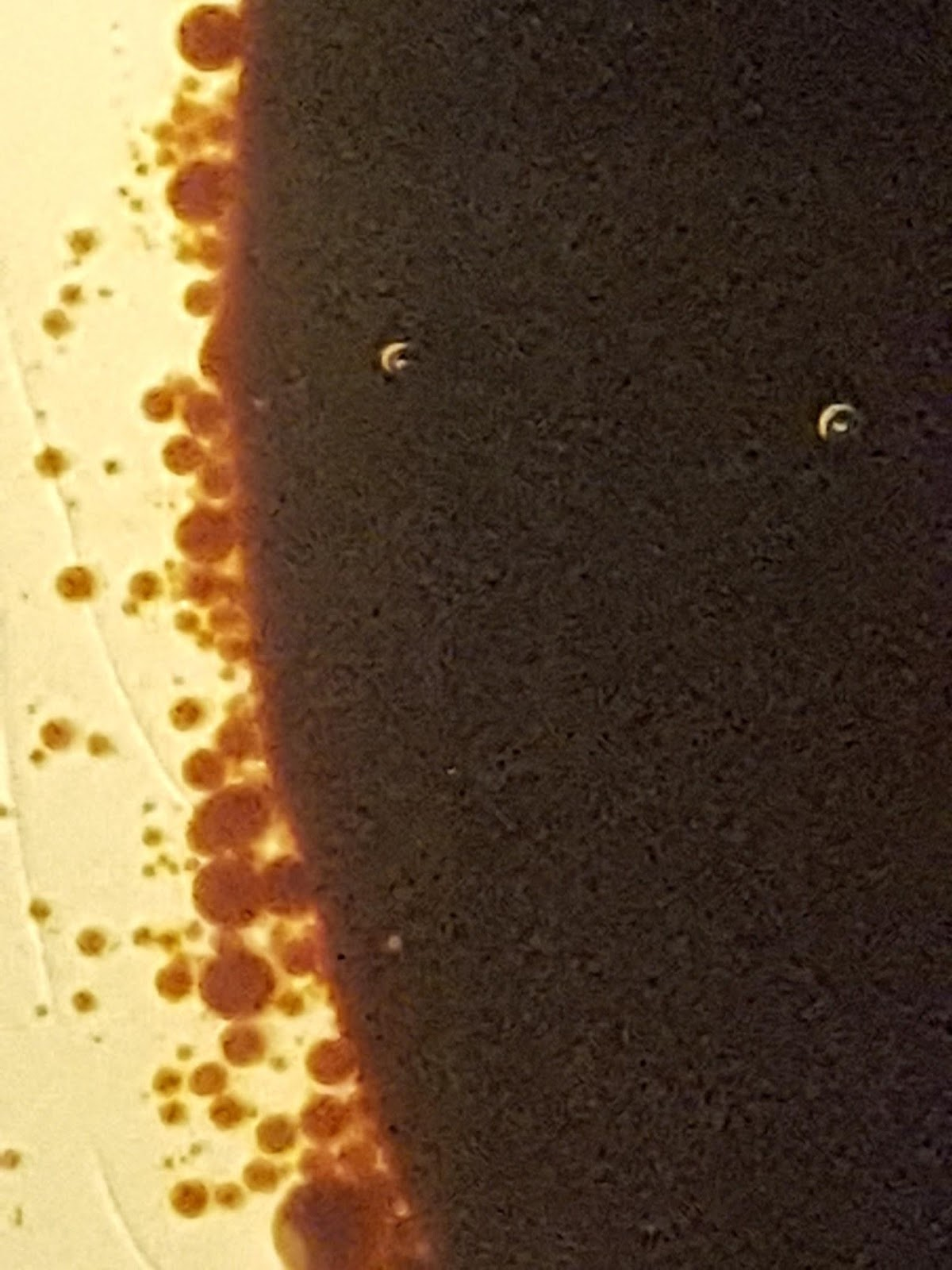 On the left there are lots of little brown droplets surrounding a large brown blob that makes up more than half the photo.