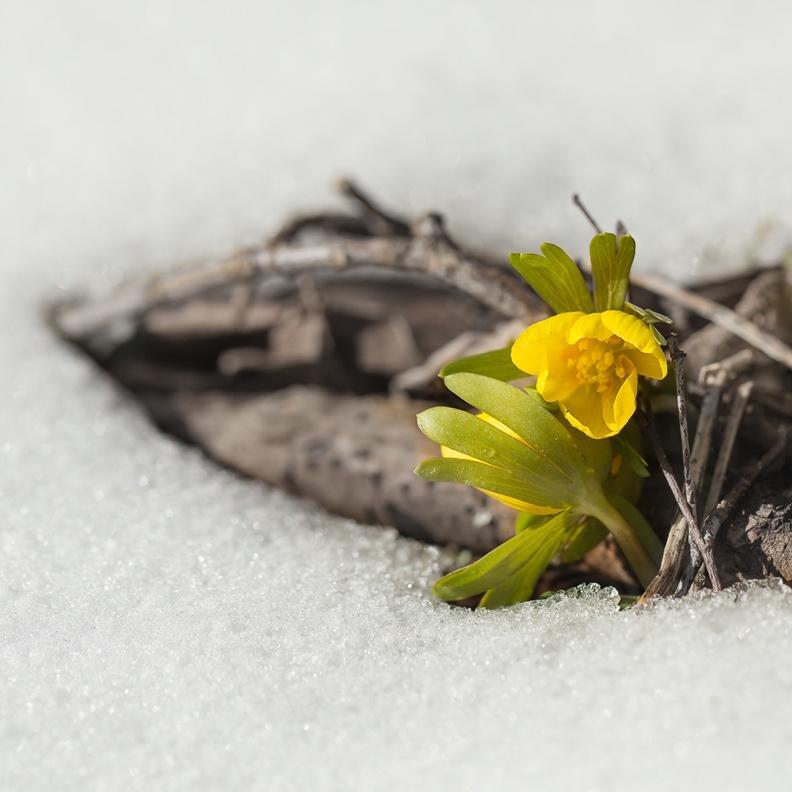 En bild som visar gul, växt  Automatiskt genererad beskrivning