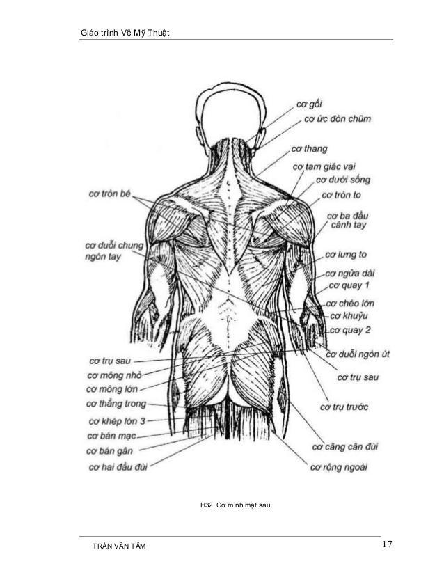 C:UsersG40-70Desktopmythuatarc.commythuatarcgiả phau cơcấu trúc cơ thểmy-thuat-1-17-638.jpg