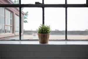 A plant by a window