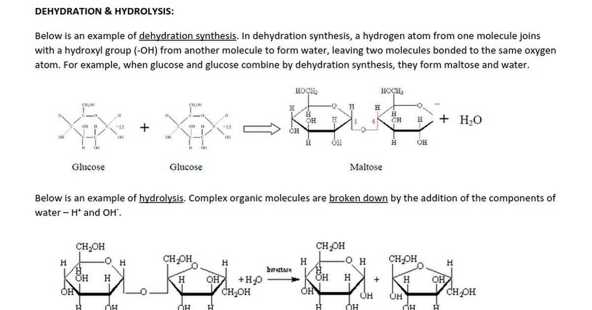 Hydrolysis Vs Dehydration Synthesis Google Docs