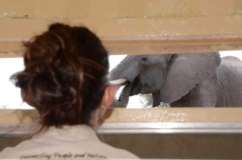 9 -Camelthorn- Watching elephants from inside the Look Up Blind.JPG