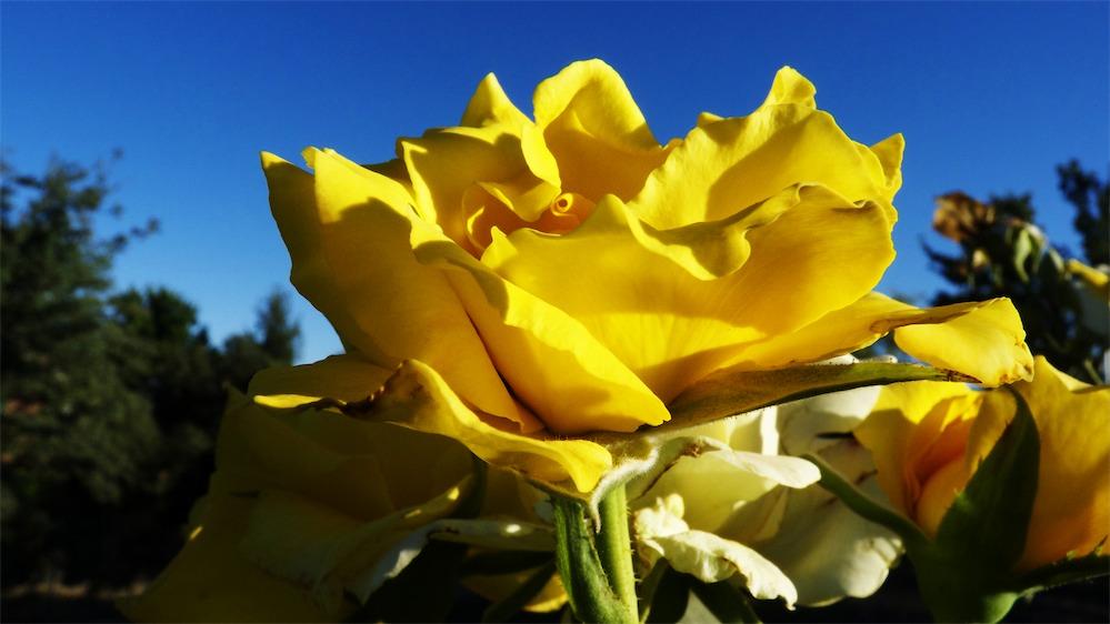 Deepest Yellow.jpg