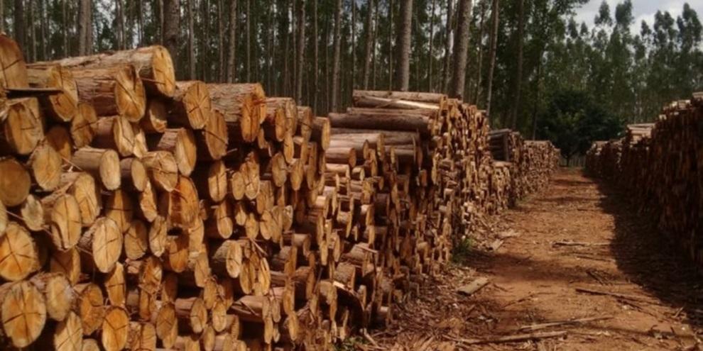 Biomassa (Fonte: Primeira Notícia/Reprodução)