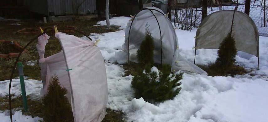 Что можно и нужно сделать в саду зимой фото 3