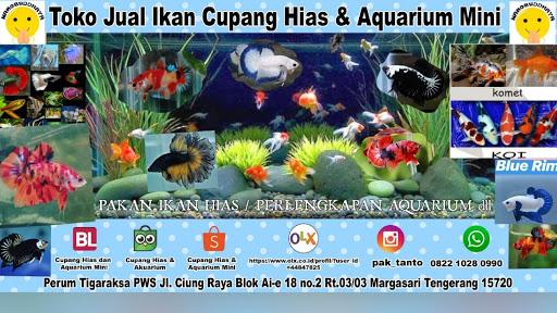 Toko Jual Ikan Cupang Hias Aquarium Mini Harmony Bettafish Shop Toko Ikan Tropis