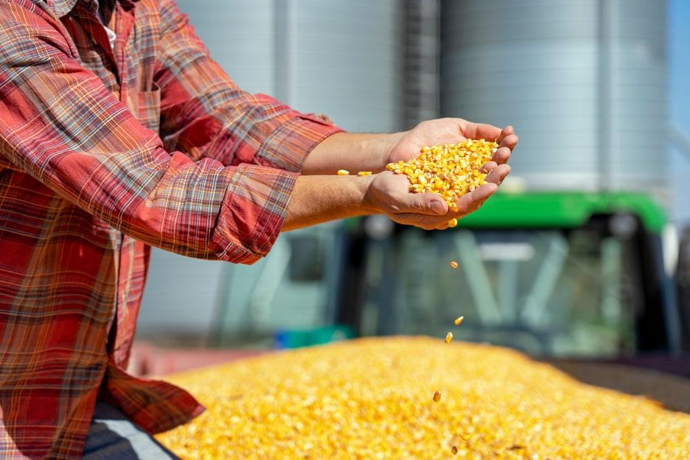 O milho foi o produto do agronegócio brasileiro mais exportado e importado em janeiro. (Fonte: Shutterstock/RGtimeline/Reprodução)