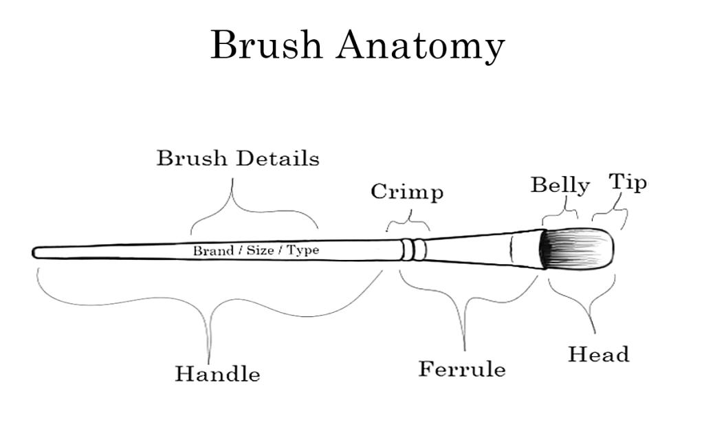 brush_anatomy-diagram