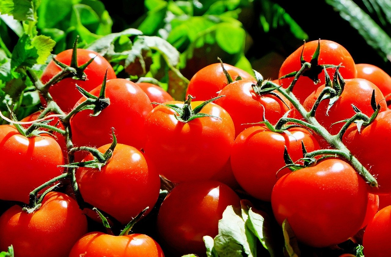 עגבניות אדומות