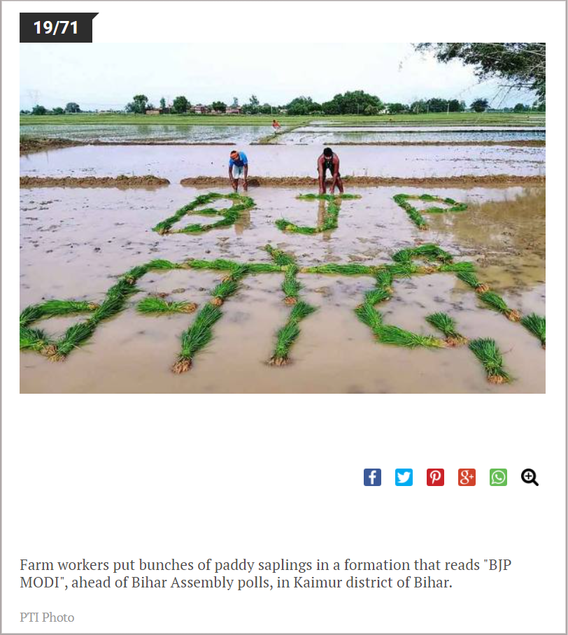 Farm workers put bunches of paddy saplings in a formation that reads BJP MODI.png