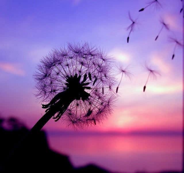 Mách bạn 8 loài hoa tượng trưng cho nỗi buồn trong cuộc sống